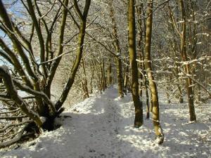 Chalkney Wood in winter